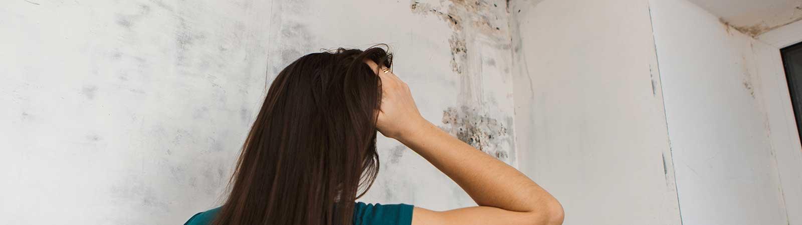 Schimmel im Haus - Ursachen, Prävention, Gegenmittel